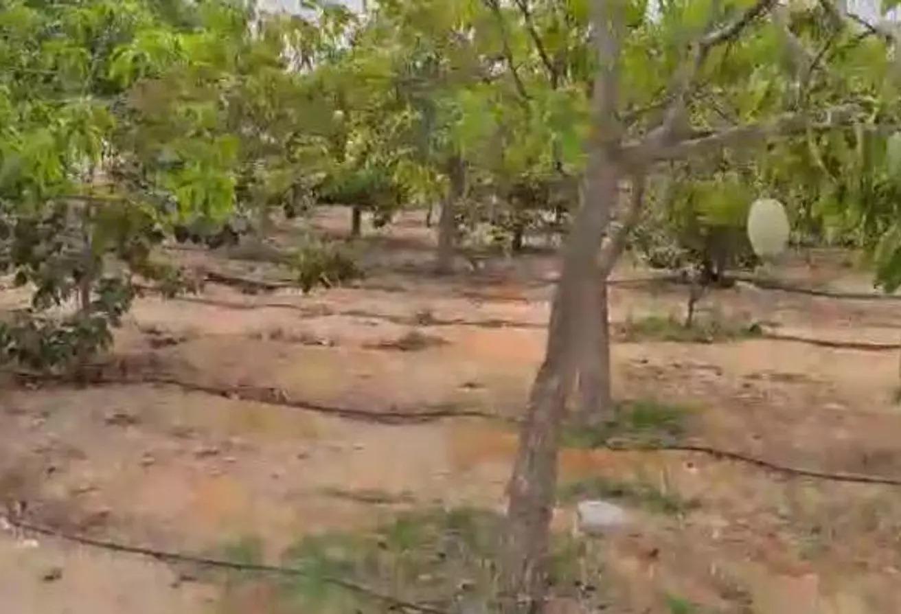 قطعة أرض للبيع في جنة العزيزية, طريق مصر اسكندرية الصحراوي